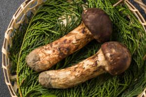 日本産 最高級松茸  Domestic matsutake mushroom